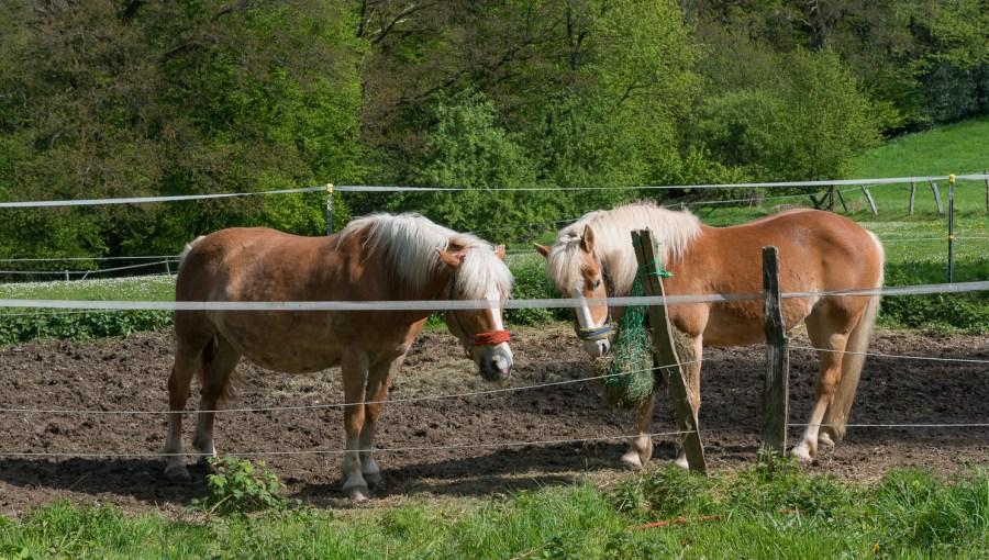 Pferde in Höhrath