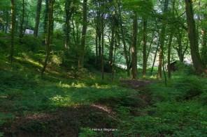 Waldweg kurz nach dem Einstieg