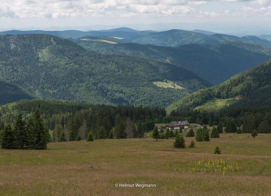 Aussicht vom Feldberg