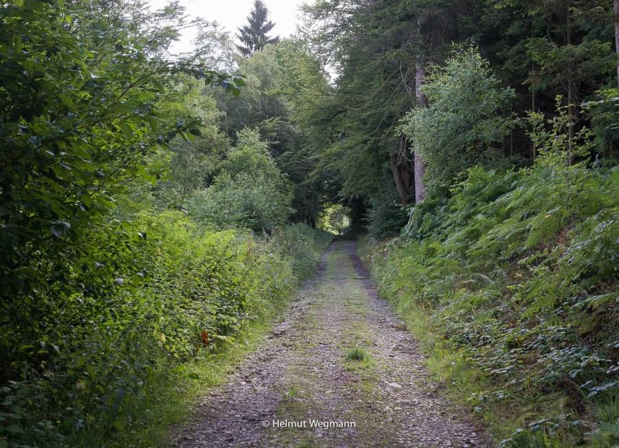 Waldweg bei Eulensiefen