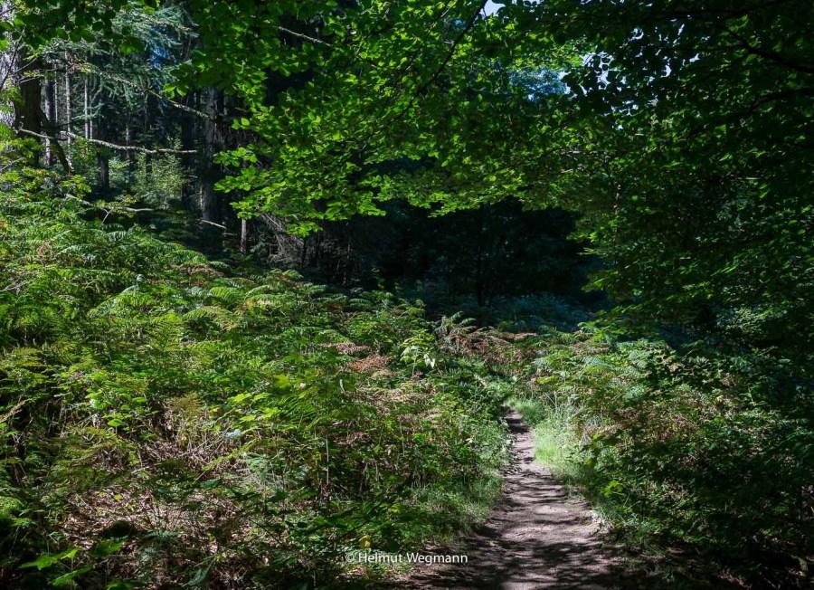 Im Wald oberhalb der Wupper