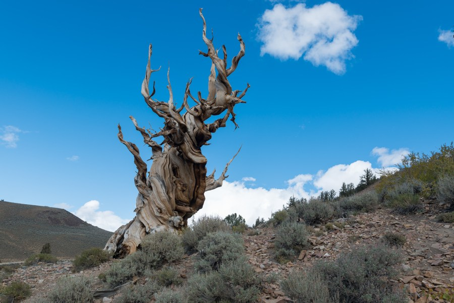Ancient Bristlecone State Park