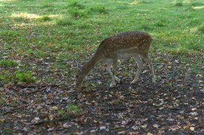 Wildpark in Neuss