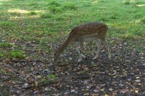 Wildpark in Neuss