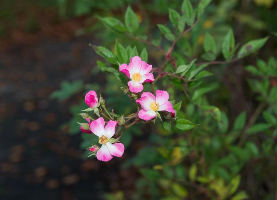 Letzte Blütenträume