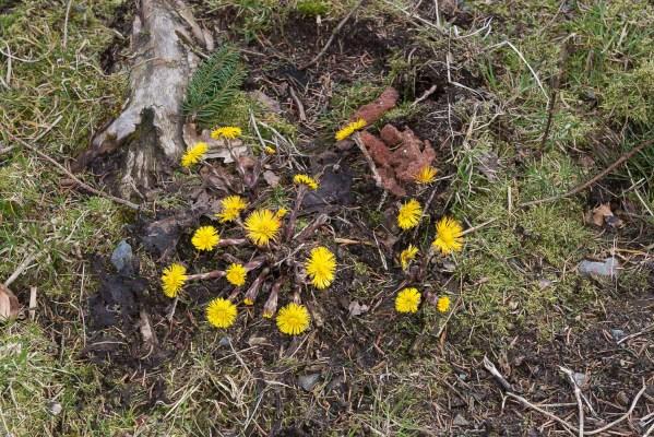 Erste Blüten