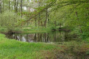 Teich neben der Wupper