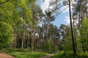 Wald zwischen Stürzelsberg und Zons