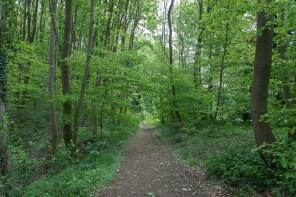 Waldweg bei Herrenstrunden