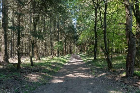 Es ging auch durch lichten Wald
