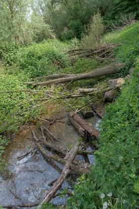 Umgestürzte Bäume bleiben liegen