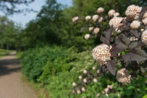 Blühender Busch am Wegesrand