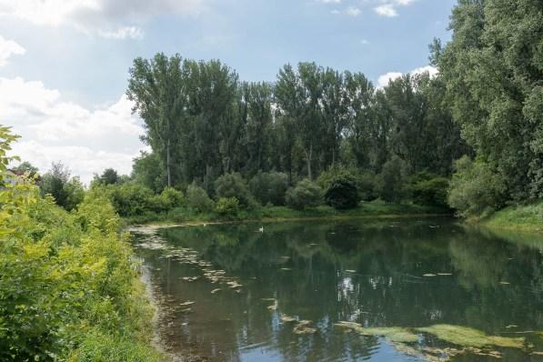 Teich zwischen Rheidt und der Halbinsel
