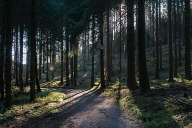 Morgenwald im Gegenlicht