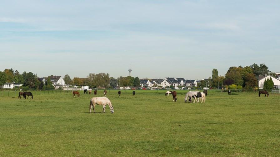 Pferde mit Fernsehturm im Hintergrund