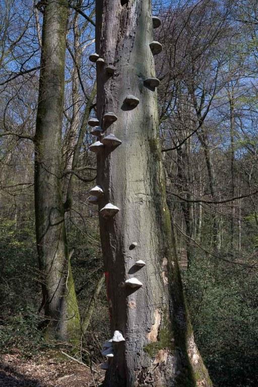 Toter Baum mit Bewuchs