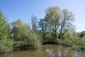 Angelegter Teich im Naturgut