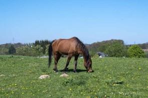 Zahlreiche Pferdehöfe gibt es im Umland