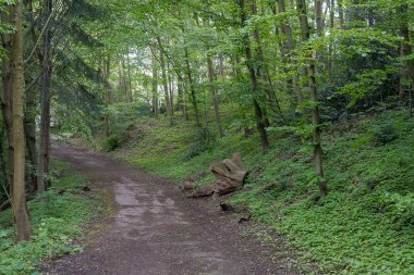 Im Wald oberhalb der Ruhr
