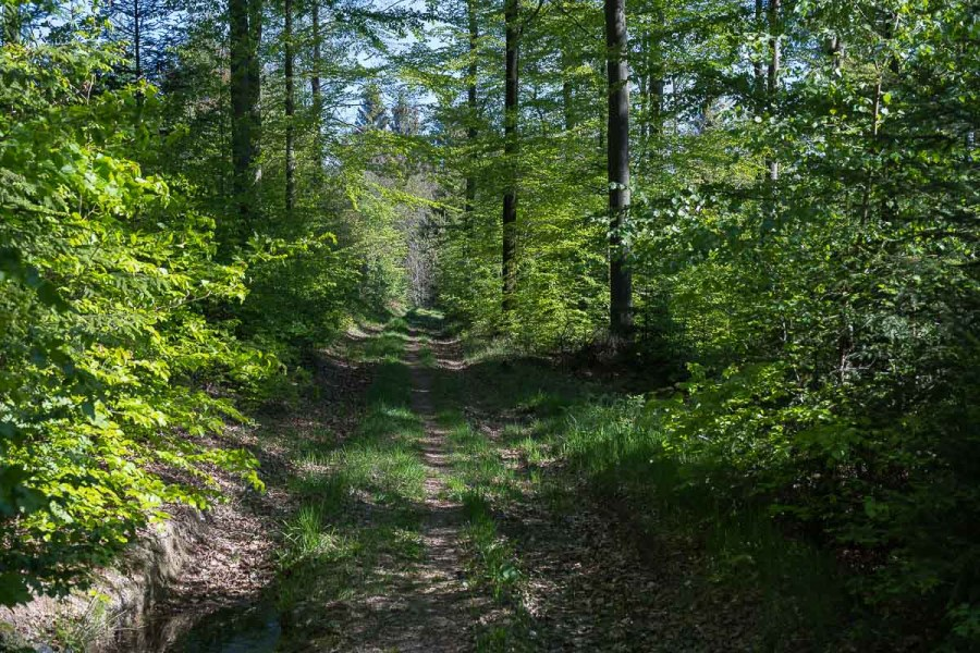 Idyllischer Waldweg gleich hinter Schloss Crottorf