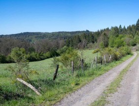 Weg am Waldrand entlang