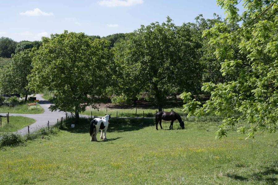 Pferdewiese unterwegs