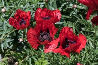 10 cm gross sind diese Blüten