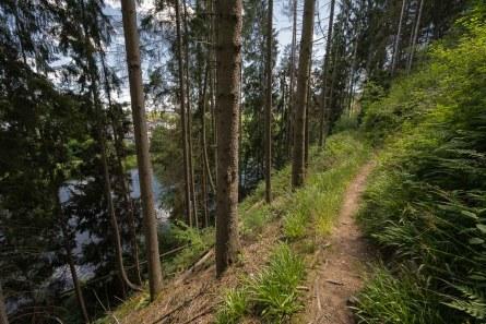 Waldweg oberhalb der Sieg