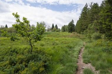 Heidelandschaft im Hohen Venn
