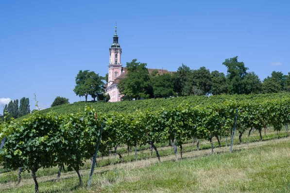 Mitten in den Weinbergen : Kapelle Birnau