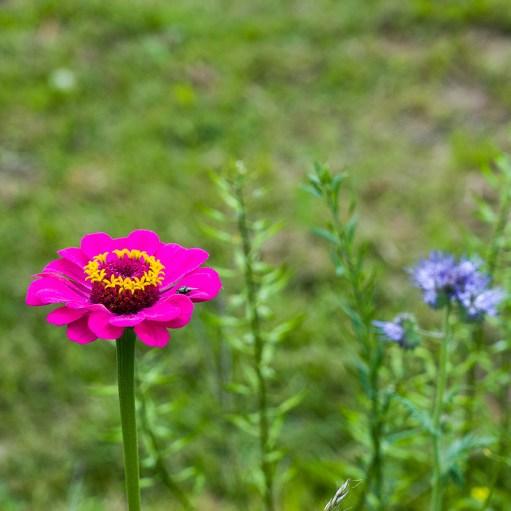 Blume unterwegs bei der Wanderung