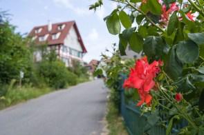 Rose mit Fachwerkhaus