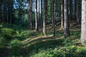 Waldweg hinter Kapellensüng