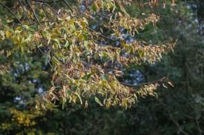 Herbst an der Niers