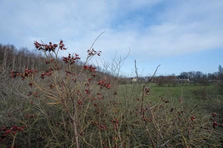 Karge Vegetation an der Halde