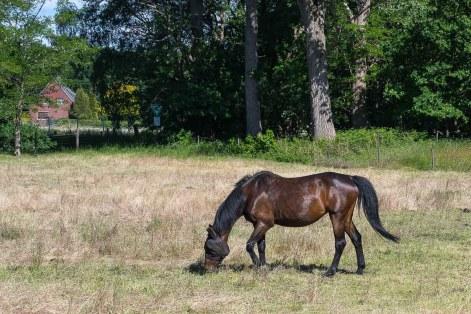 Pferdeweide an der Schlägerheide