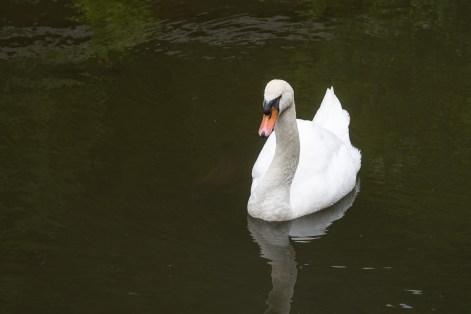 Auf einem Teich an der Bembermühle