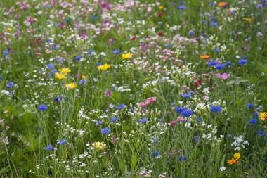 Blumenwiese am Pferdehof