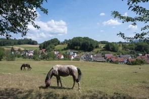 Viele Pferde sahen wir unterwegs