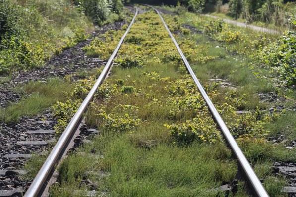 Zugewachsene Bahngleise