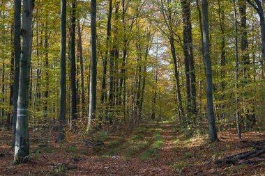 Herbstwald kurz hinter dem Flugplatz