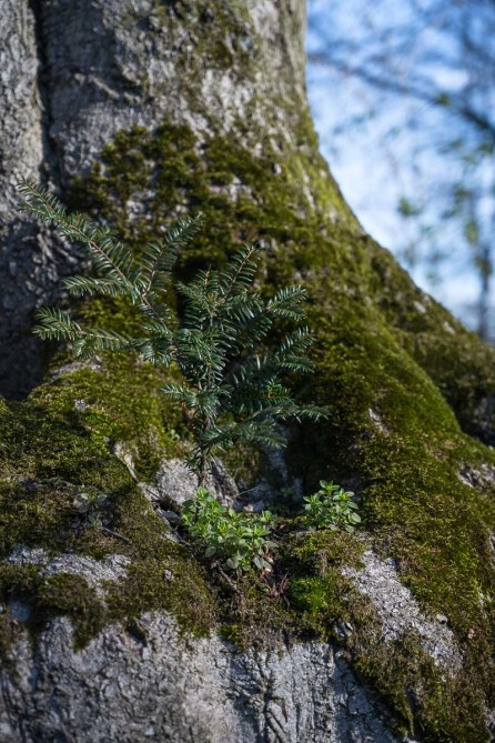 Bäumchen im Baum