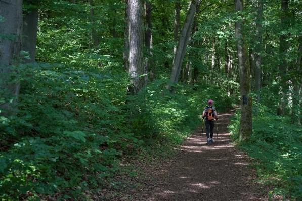 Typischer Waldweg unserer Route