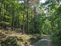 ein Stück durch den Wald