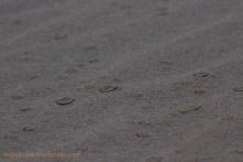 Hier der Beweis: Es hat in der Sahara geregnet