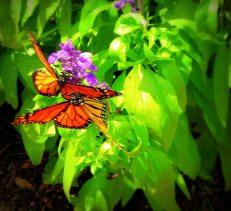 Hershey Gardens, Hershey PA