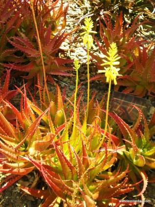 Desert Botanical Gardens, Phoenix AZ