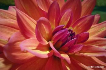 Camera practice - flower 008