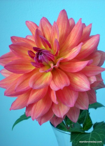 Camera practice - flower 010