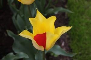 Annual Tulip Show Keukenhof, Netherlands